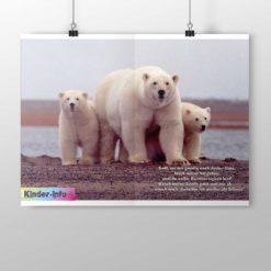 Kinder-Info zu der Arktis