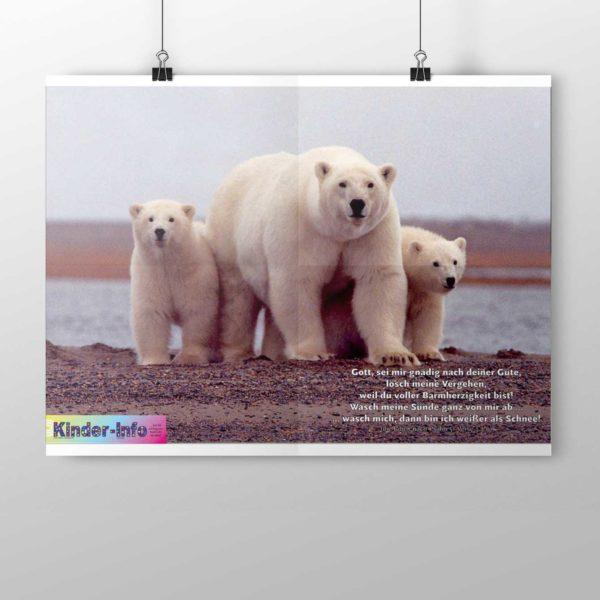Kinder-Info Arktis